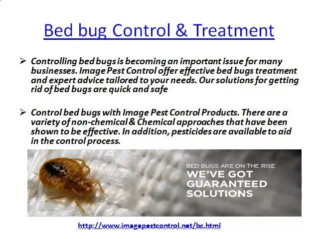 Bed Bug Control Bangalore by Imagepest Control