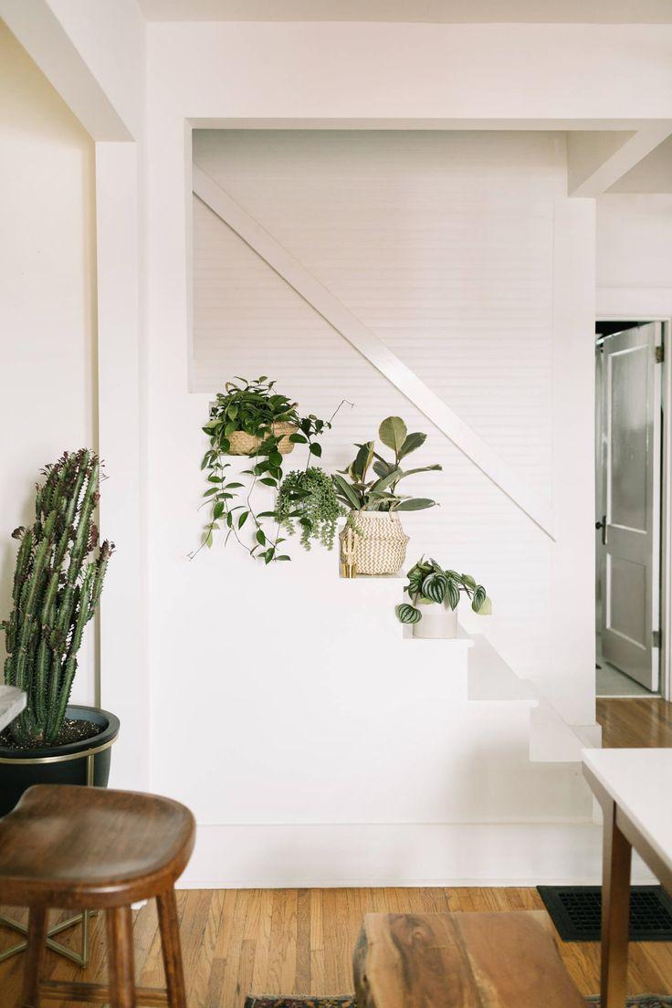 Indoor Hanging Wall Plants