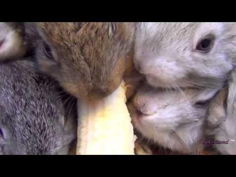 Baby Bunny Rabbits Eating Banana - YouTube