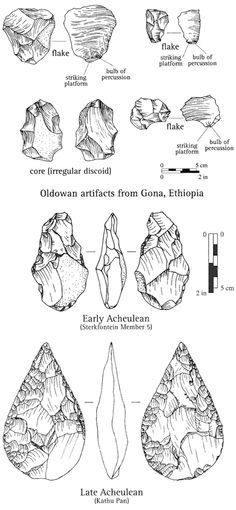 The Dawn of Culture: The Oldowan people, whose artifacts are shown in the top panel, were the first tool makers. Produced sharp-edged flakes and may have used the core of stone from which the flakes were struck to crack bones for marrow. The bottom panel shows Early and Late Acheulean hand axes, possible product of a tradition of deliberately, meticulously shaping cores. But the Oldowan core is virtually identical to the Early Acheulean hand axe in the upper left corner of the bottom pane...