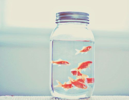 OMG ... need mason jars of goldfish at the wedding ... orange .. love this picture also.