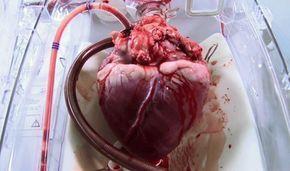 Box heart / Caixa do coracão