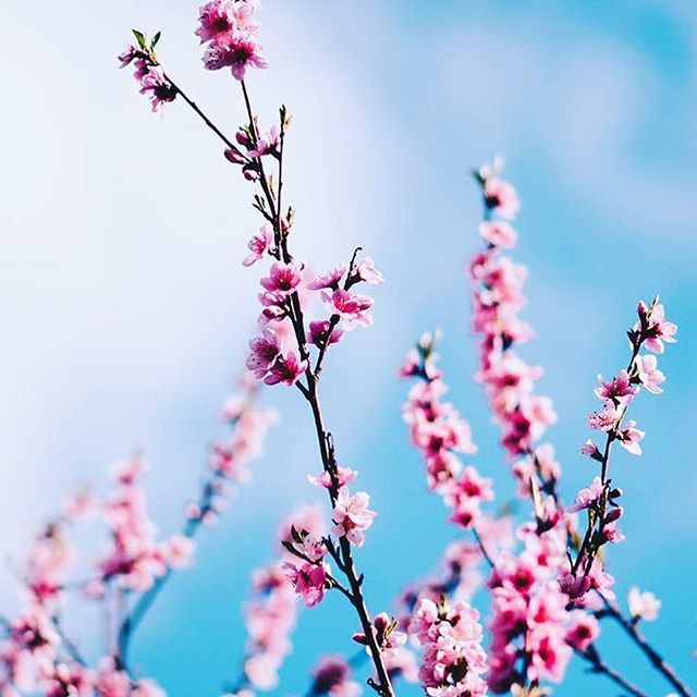 Spring Is Here You Can Find This Iphonewallpaper And 1 500 More Cute Backgro Spring Wallpaper Flower Background Iphone Iphone Wallpaper Pinterest Spring wallpaper for iphone xs max