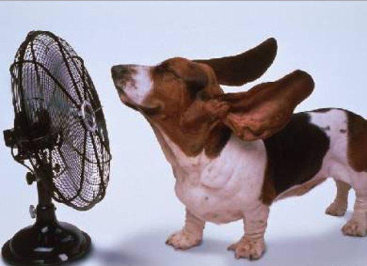 Hot dogs: La canicule menace, les chiens se mettent la truffe au frais - News Loisirs: Animaux - lematin.ch