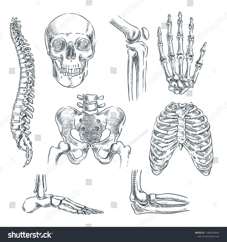 Illustration Vector Hand Draw Doodles Of Human Skeleton Manual Guide