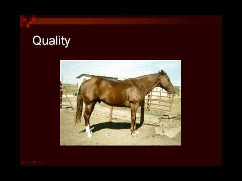 Great links to videos about horse judging