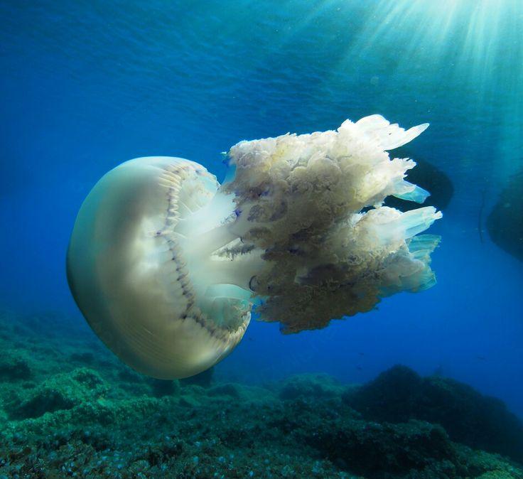 Ayvalık dalış okulu - ida dalış merkezi #scuba #scubadiving #diving #underwaterphotography #dalisnoktam #ayvalikdalis #daliskursu #dalisokulu #dalismerkezi #ayvalık ##ayvalikscuba #idadalismerkezi #idadiving www.idadiving.com