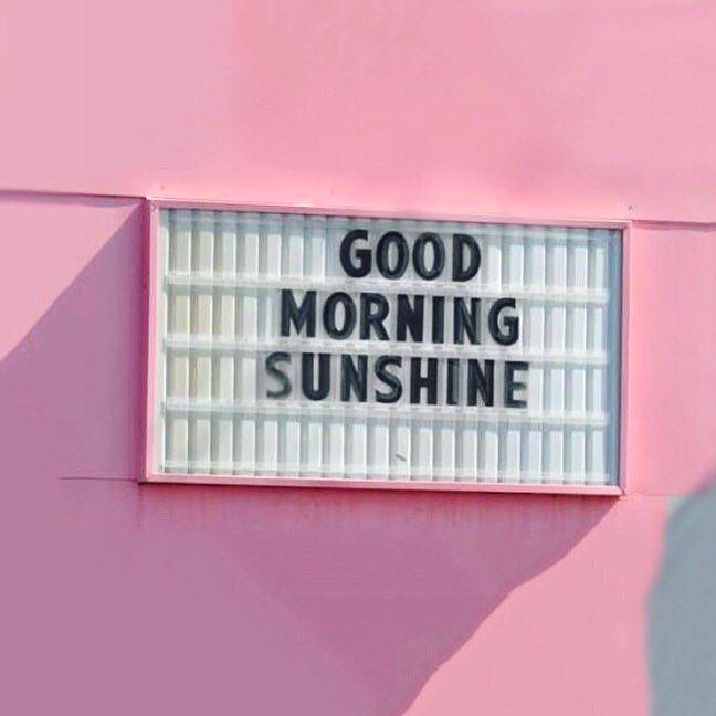 Good Day Sunshine Victoria S Secret : Best ⇟ victoria secret mini dogs collection images on