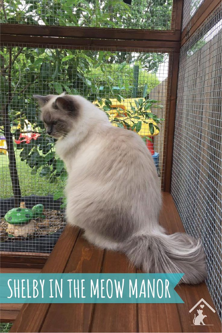 Let your feline friends out to play in the Meow Manor outdoor cat enclosure. Your cats will love it and you'll have piece of mind knowing they are safe while enjoying the great outdoors. Click the image to find out more. #meowmanor #outdoorcatenclosures #backyardcatenclosures