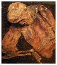 Lindow-Man-eg of Celtic human sacrifice discovd in bog near Manchester 1984-on display in British Museum- legs & pelvis missing, leaving chest, head & arms-died between 2 BC & 119. Threefold death began w 3 blows to head, followd by incision into throat w knife to drain blood. Lastly garrote, found embedded in neck, to asphyixiate & break neck-cast face down into already mature bog at Lindow Moss, symbolic drowning-highly indicative of ritual slaying.