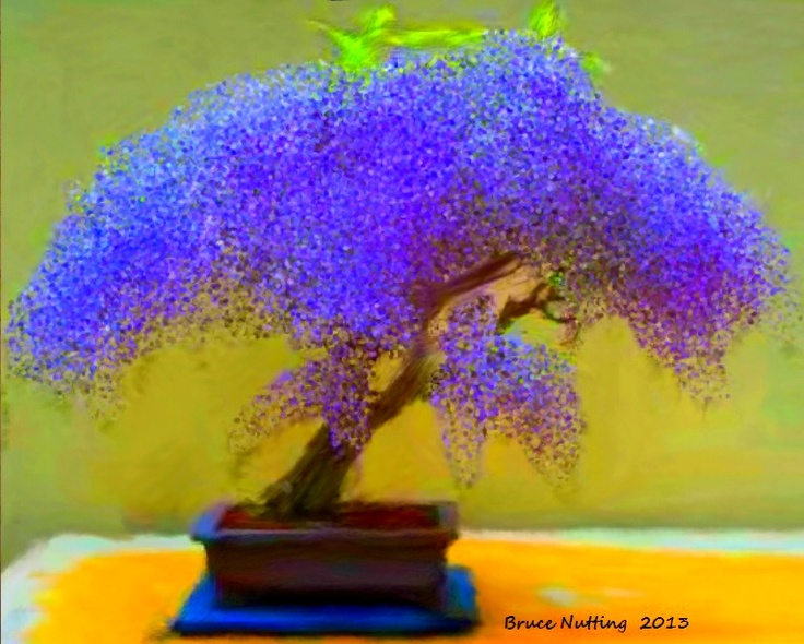 wisteria bonsai pinteres. Black Bedroom Furniture Sets. Home Design Ideas