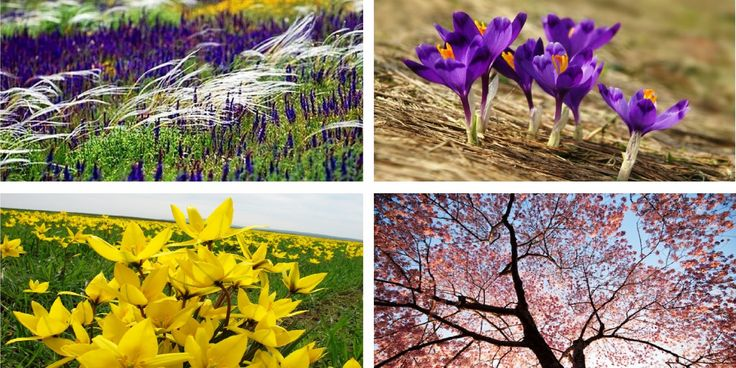 Мандрівка у країну квітів. П'ять наймальовничіших місць України для подорожей навесні (фото)