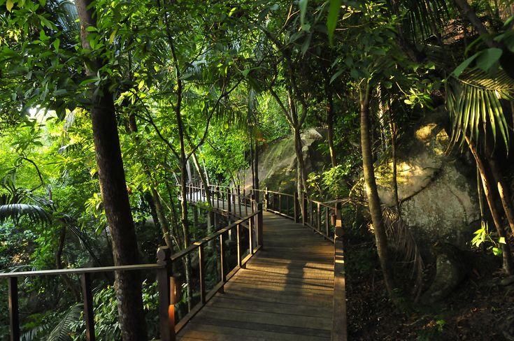 Boardwalk bushwalk through the jungle of Tioman Island, Malaysia.