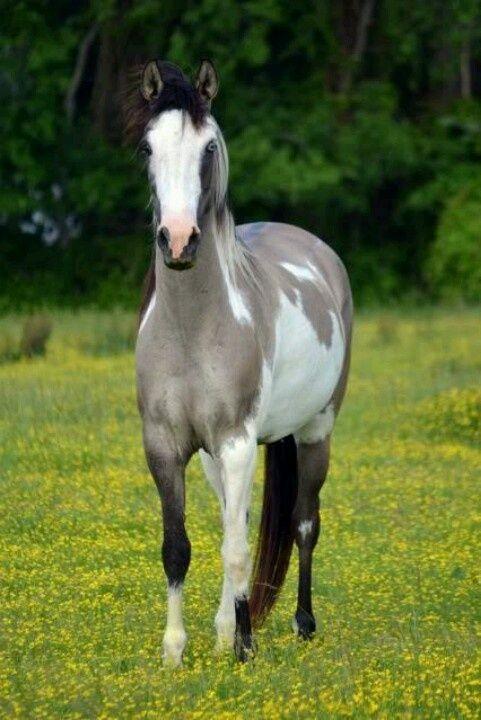 109 besten pferde im wasser bilder auf pinterest sch ne. Black Bedroom Furniture Sets. Home Design Ideas