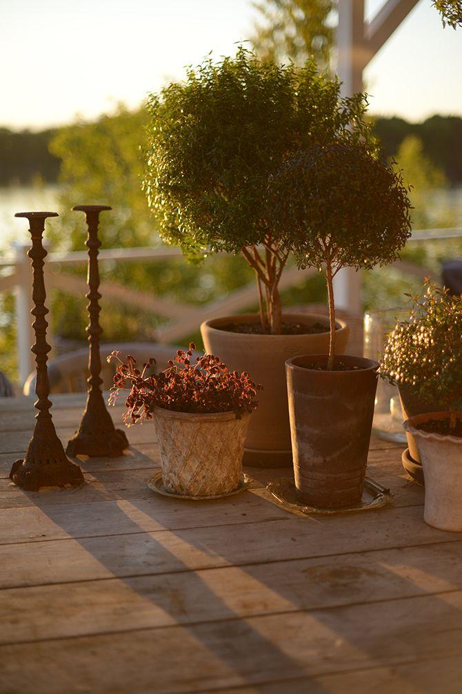 Myrtenträd I Victoria Skoglund