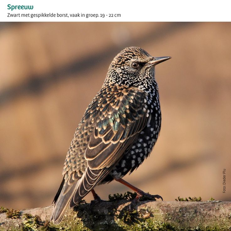 Alle tuinvogels in één oogopslag   Het Grote Vogelweekend van Natuurpunt