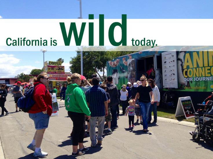"""Just another day for the the wildest truck on the road--""""Animal Connections"""" hits the University of California, Davis. See a full tour schedule at http://www.animalconnections.com #veterinarymedicine #pets"""