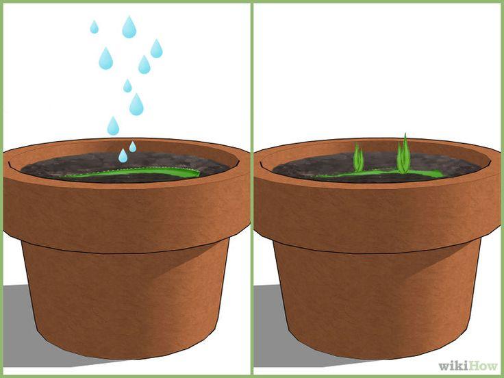 Image titled Grow an Aloe Plant With Just an Aloe Leaf Step 3
