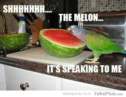 speaking melon haha!