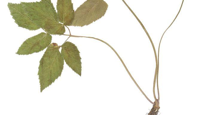 ¿Qué árboles tienen hojas simples dentadas?. Existe una amplia variedad de árboles norteamericanos que presentan hojas simples dentadas. Los árboles caducifolios dan sombra en verano a praderas y patios con sus copas de este tipo de hojas. Los acebos perennes de hojas grandes tienen hojas simples espinosas y dentadas. Los árboles frutales silvestres y domésticos también presentan hojas ...