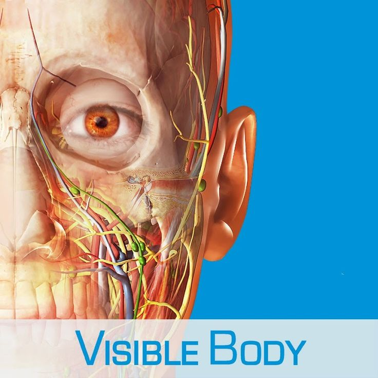 18 best VISIBLE BODY / . COM images on Pinterest | 3d anatomy ...