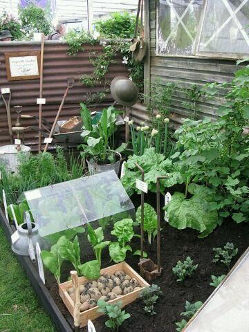 Tips dan cara Membuat Kebun Sayuran Di Pekarangan rumah | Tips dan Inspirasi Berkebun