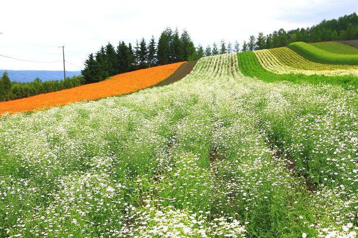 With its wonderful lavender fields, wide blue sky and cobalt blue pond, the Furano-Biei area in Hokkaido is an amazing destination for a summer trip. This article introduces some of the great attractions in Furano and Biei.
