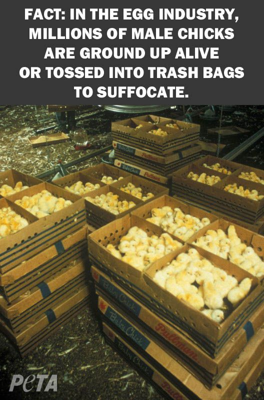 Make the connection. There is an animal holocaust and if you eat eggs, you are causing it.