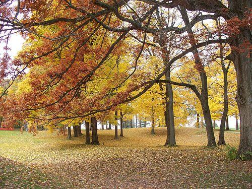 Culver Fall.  Culver, Indiana.