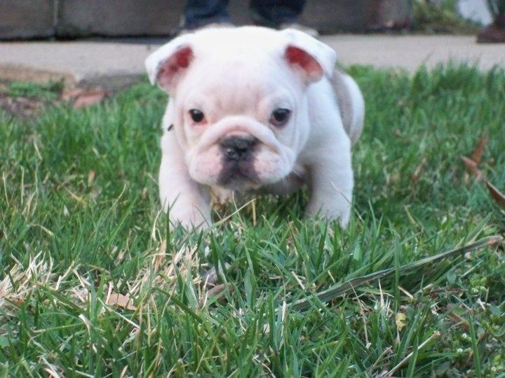 Baby pics of Daisy