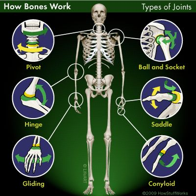 129 best images about kinesiology on pinterest  massage