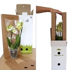 Mail order plant packaging. PD