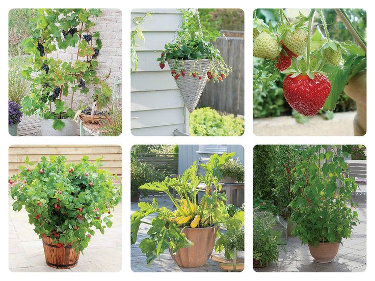 Kwiaty, owoce, drzewa, rośliny http://www.weranda.pl/ogrody/grzadka-w-wersji-mini #grządka #inspiracje #ogródek #ogrody #fantazja #kwiatki #owoce #doniczki #weranda #styl