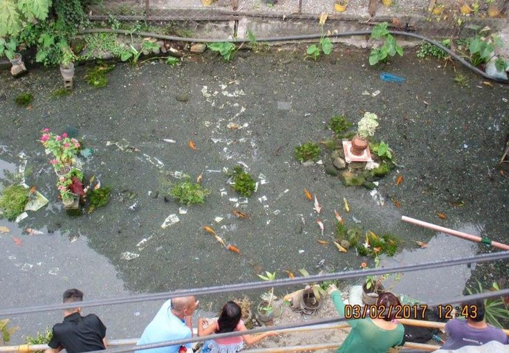 Filthy canal cleaned and transformed into natural koi pond Filthy canal cleaned and transformed into natural koi pond excerpt posted from http://news.abs-cbn.com/ ILIGAN CITY – What used to be a filthy drainage canal in Purok de Oro in Barangay Poblacion is now a favorite hangout for locals after it was transformed into a koi pond. Lito …