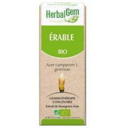 Érable Champêtre bourgeon Bio - Cholestérol 50 ml - Herbalgem