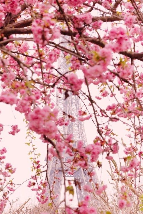 Eiffel Tower in Spring, Paris