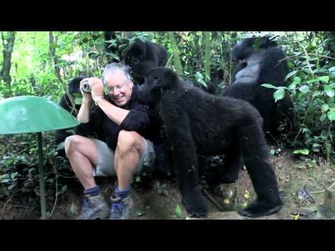 NEW - (short version) - An incredible chance encounter with a troop of wild Mountain Gorillas in Uganda. Check blog.commonflat.com for more photos and background on this once in a lifetime experience.