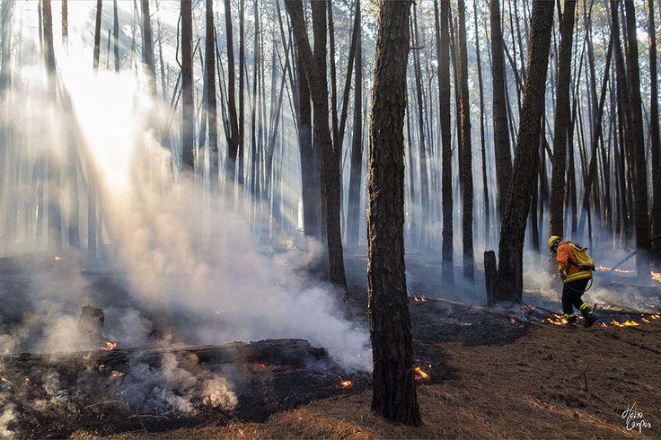 193Bombeiros: Incêndio Florestal no Pinheiral do Paranoá | 19 de...
