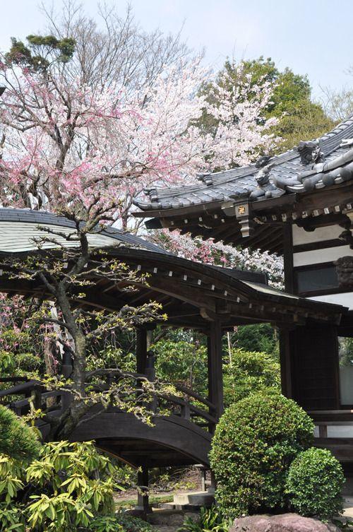 Japanischer Garten, Kirschblütenbaum, Pflanzen, Busch, Brücke