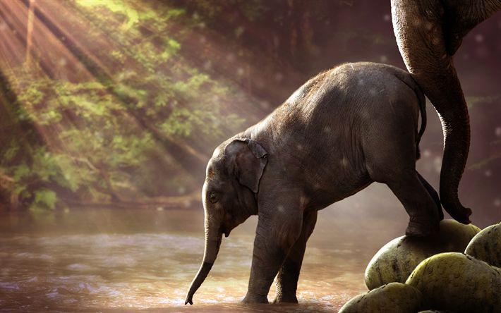 Lataa kuva Pikku elefantti, aamulla, lake, Afrikka, norsuja