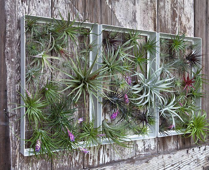 Garden Wall Art 81 best air plant display ideas images on pinterest | air plants