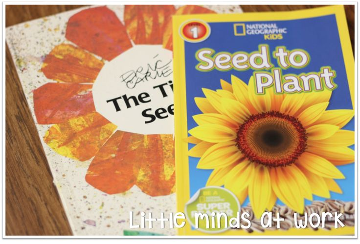 Recap of Seeds and Butterflies OH MY!