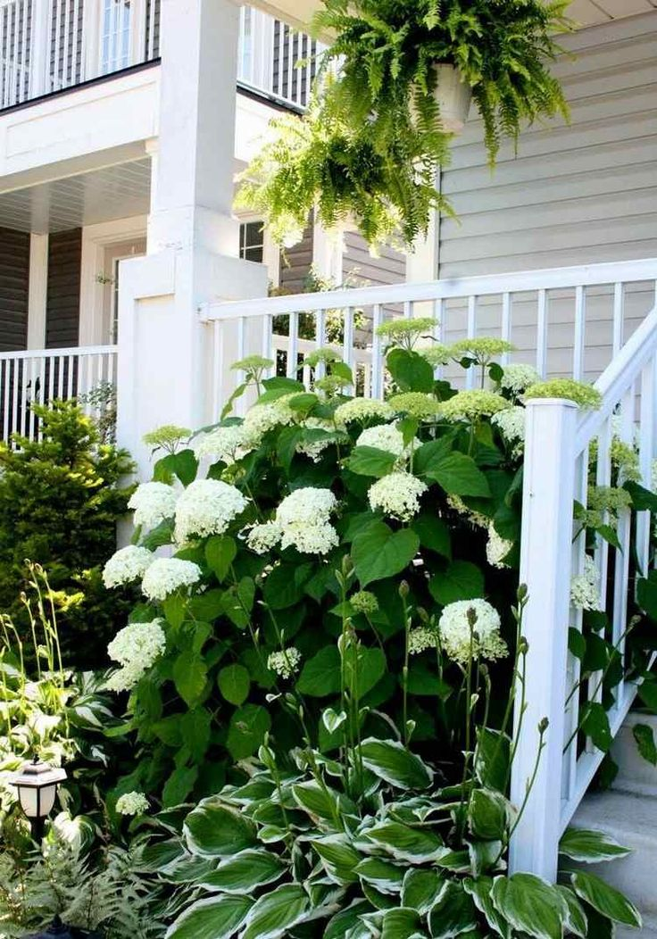 white hydrangea and hosta Funkia