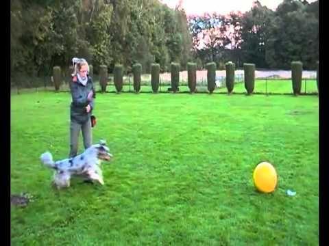 Treibball Beginner ( Teil2 ) - YouTube