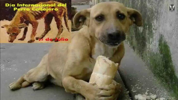 Hoy es... Día Internacional del Perro Callejero, hoy es 27 de Julio