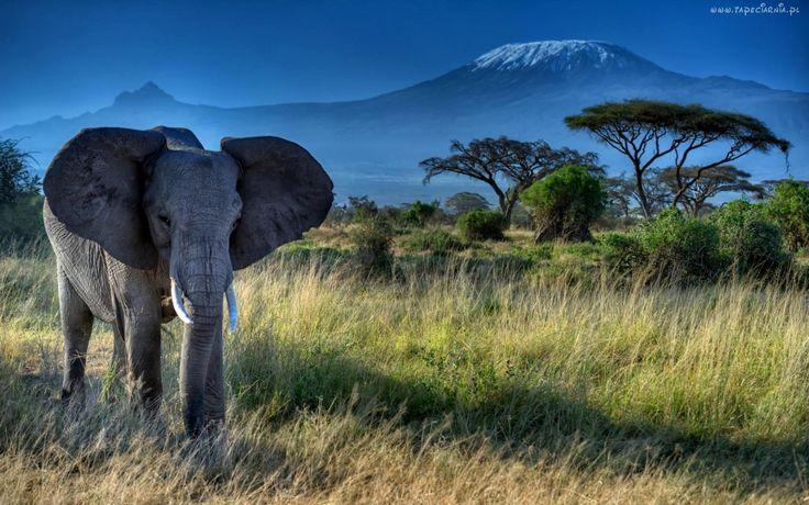 Słoń, Indyjski, Drzewa, Trawy, Góry