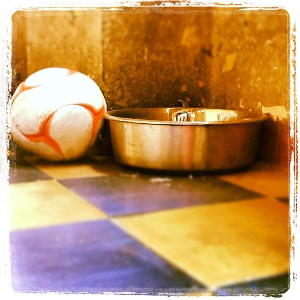 Ciotola: pronta. Pallina: pronta. Manchi solo tu, il vero protagonista del  CANCORSO 2013!!  www.cancorso.it  cancorso2013, cancorso, cani, cane, concorso, concorsi, contest, il messaggero, quotidiano, animali, storie, canstorie, coppie, cancoppie, ciotola, palla, pallone, gioco, giocare
