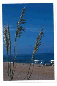Browse Outer Banks Vacation Rentals