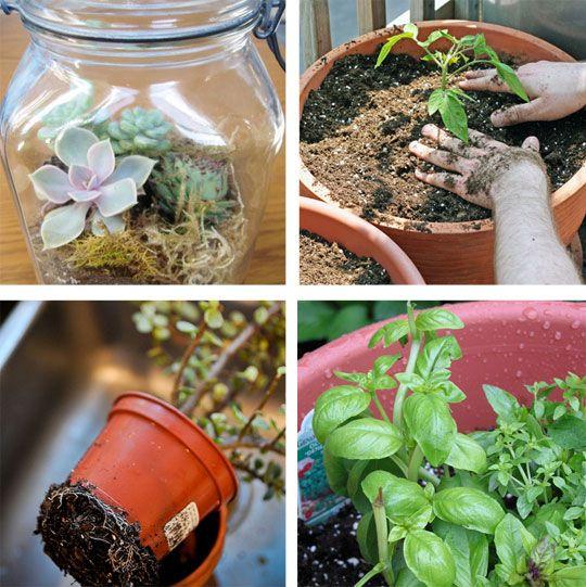 seven container garden how-to's.: Gardens Ideas, Container Gardens, Home Tips, Apartment Therapy, Plants Ideas, Gardens Outdoor, Gardens How To, Gardens Tips, Gardens Growing