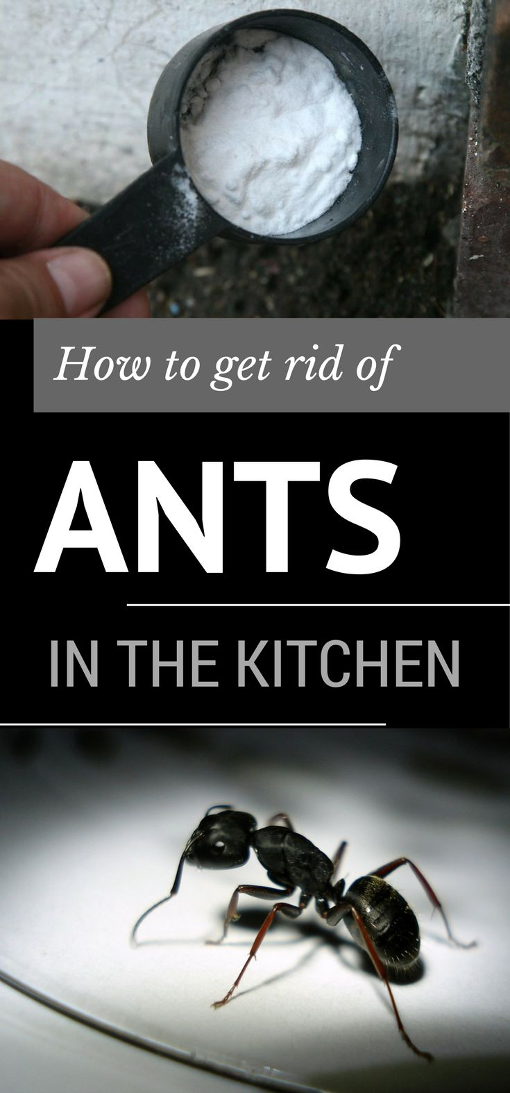 Here are the best methods to get rid of ants in the kitchen.